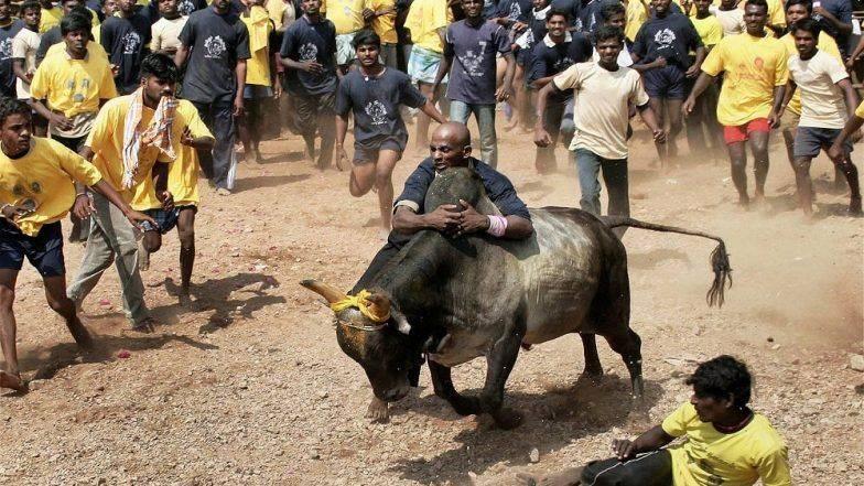 तमिलनाडु : जल्लीकट्टू के दौरान 2 लोगों की मौत, 31 घायल