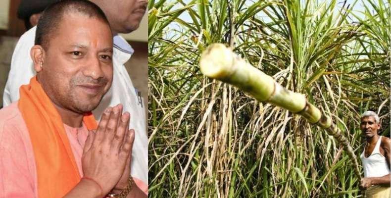 गन्ना किसानों का 10 हजार करोड़ का बकाया, भाजपा का था वादा- 14 दिन में मिल जाएगा पैसा