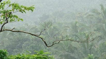 Kerala: मानसून ने दी दस्तक, कई इलाकों में हाई अलर्ट