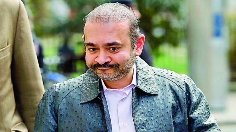 नीरव मोदी को DRT ने दिया झटका, कहा-पीएनबी और अन्य को 7200 करोड़ रुपये चुकाएं