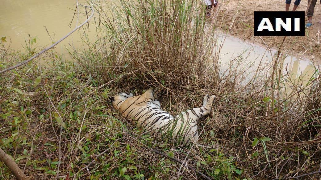 महाराष्ट्र में एक बाघिन और उसके दो शावकों की मौत