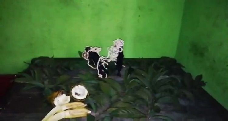 झारखंड में कैमरे में कैद हुआ भूत!