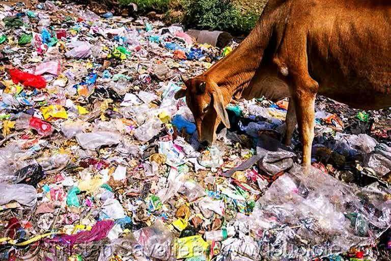 जानलेवा बन चुका है प्लास्टिक कचरा - ज्ञानेन्द्र रावत
