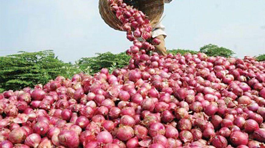 केंद्र सरकार ने प्याज के निर्यात पर तत्काल प्रभाव से लगाई रोक, बढ़ती कीमतों पर लगेगा ब्रेक!