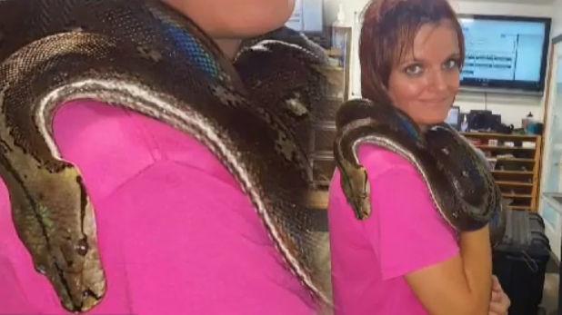 OMG! महिला की लाश से लिपटा मिला 8 फुट का अजगर, घर से निकले 140 सांप