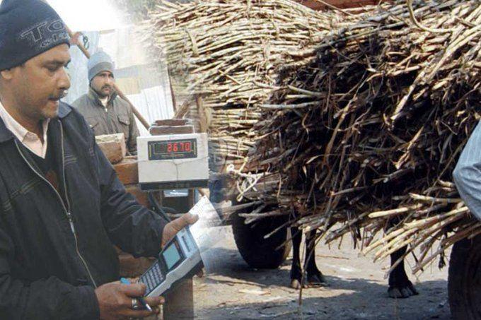 UP गन्ना किसानों के लिए तुगलकी फरमान, अब पर्ची जारी होने के 3 दिन के बाद नहीं होगी खरीद