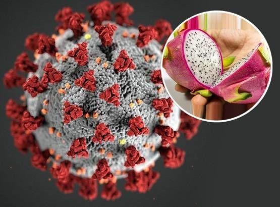Corona virus से लड़ने के लिए शरीर को चाहिए ये 3 विटामिन, इम्यूनिटी बढ़ते ही कह देंगे कोरोना को बाय बाय