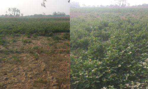 प्राकृतिक आपदा और टिड्डियों के भय के बीच किसानों के लिए नई आफत