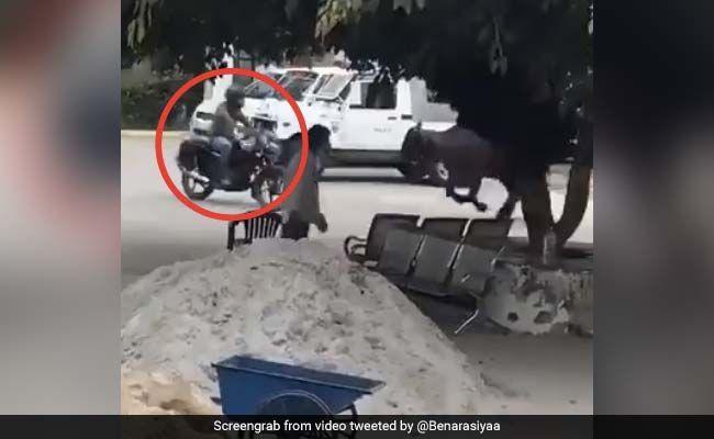 बाइक पर जा रहा था पुलिसवाला, गुस्से में भैंस ने कर दिया Attack, सड़क पर ऐसे खदेड़ा सींग से... देखें Video